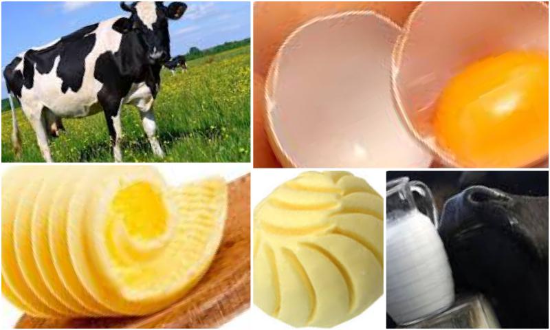 Organik Yumurtada Tavuk Beslenmesinin Önemi