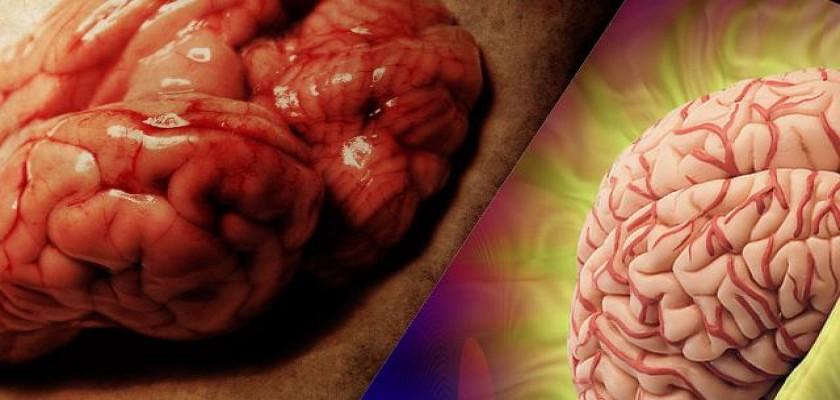 Beynimizle İlgili Bilmediğimiz Şeyler