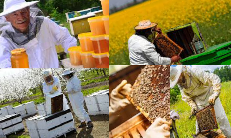 Arı Yetiştiriciliği ve Bal Üretimi Yaparak Para Kazanma