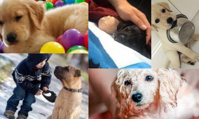 Obez Köpekler İçin Beslenme Düzeni Nasıl Olmalıdır?