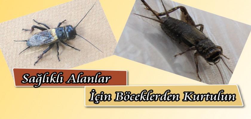 Sağlıklı Alanlar İçin Böceklerden Kurtulun